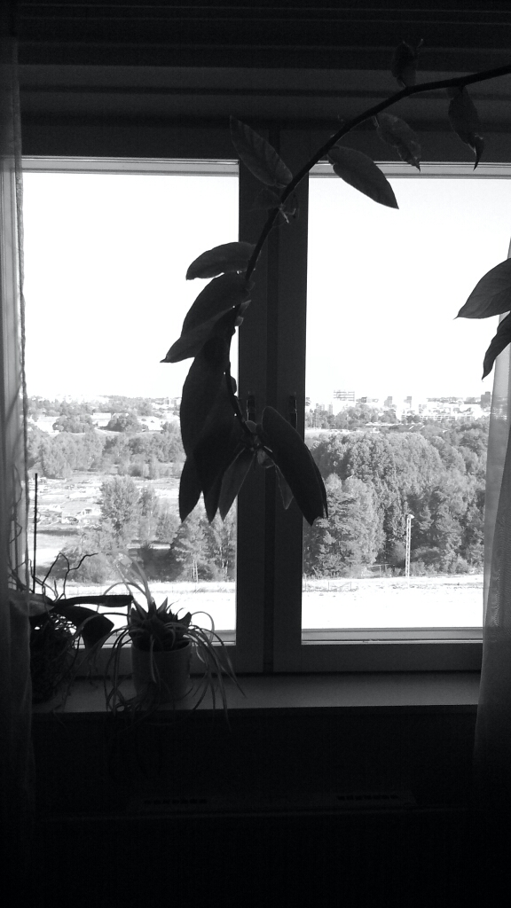 black and white view out window
